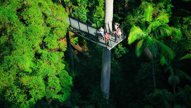 Tamborine Mountain Skywalk