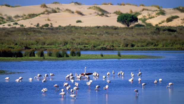 Donana National Park