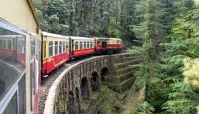 indian-train-forest